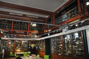 Grant museum of zoology (Medium)