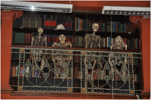 grantmuseum of zoology